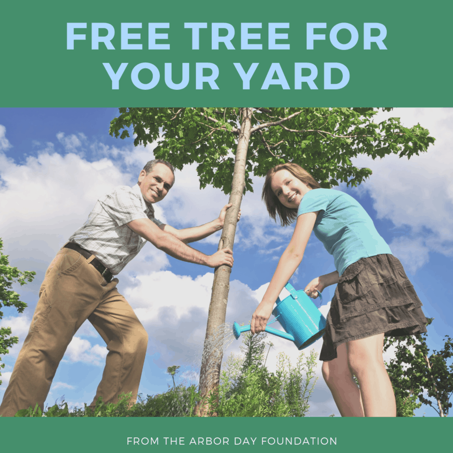 Free Tree For Your Yard from the Arbor Day Foundation