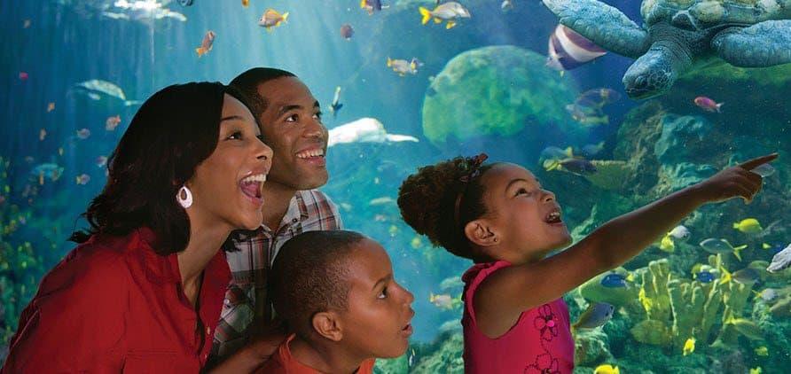 Free Sea World Admission for Teachers