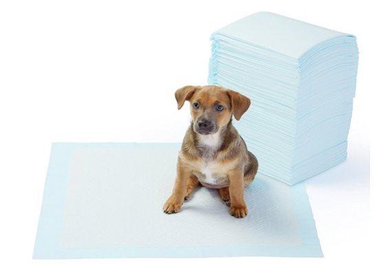 AmazonBasics Pet Training Pads 100 Count $13.65