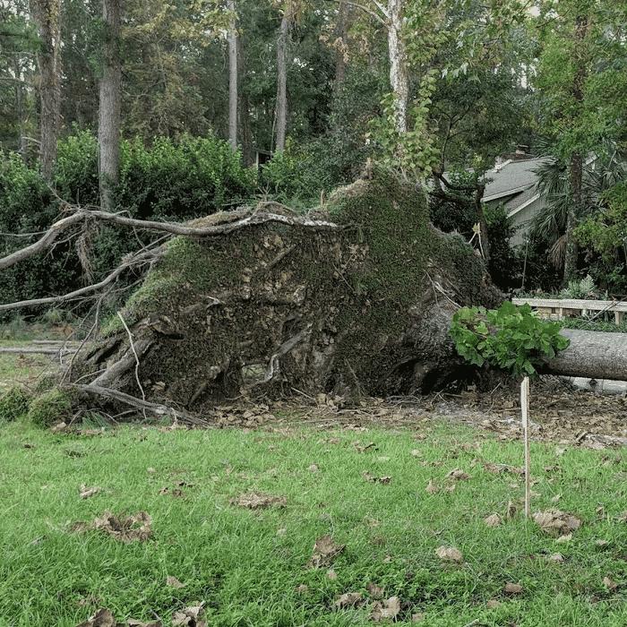 Hurricane Michael Update - Want to Help?