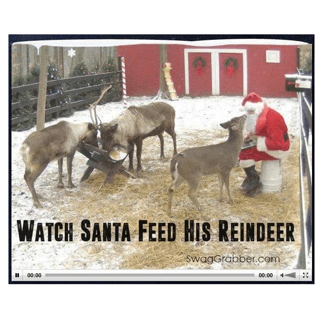 The Reindeer Cam is Back - Watch Santa's Reindeer Feed!