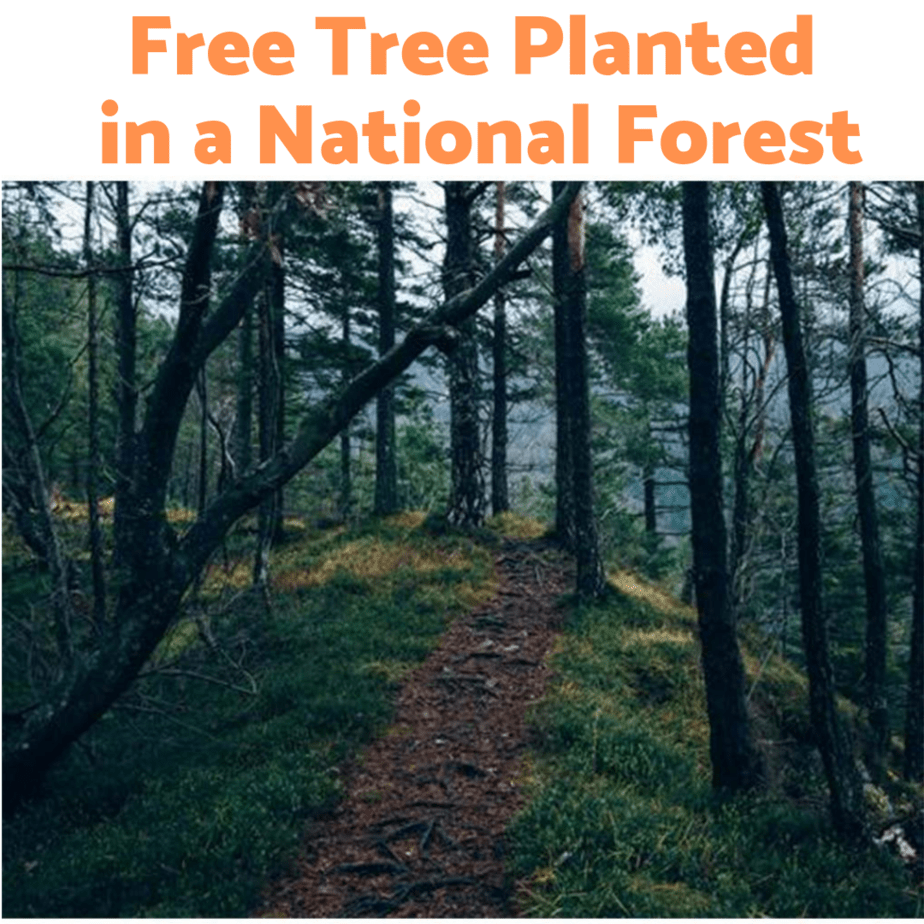 Free Tree Planted in a National Forest