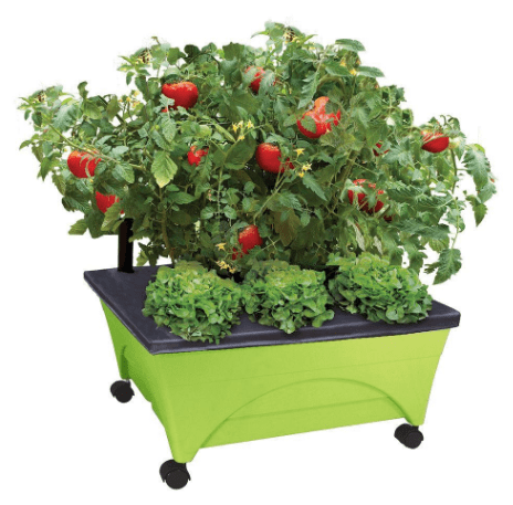 Home Depot: Patio Raised Garden Bed Kit with Watering System Only $19.99