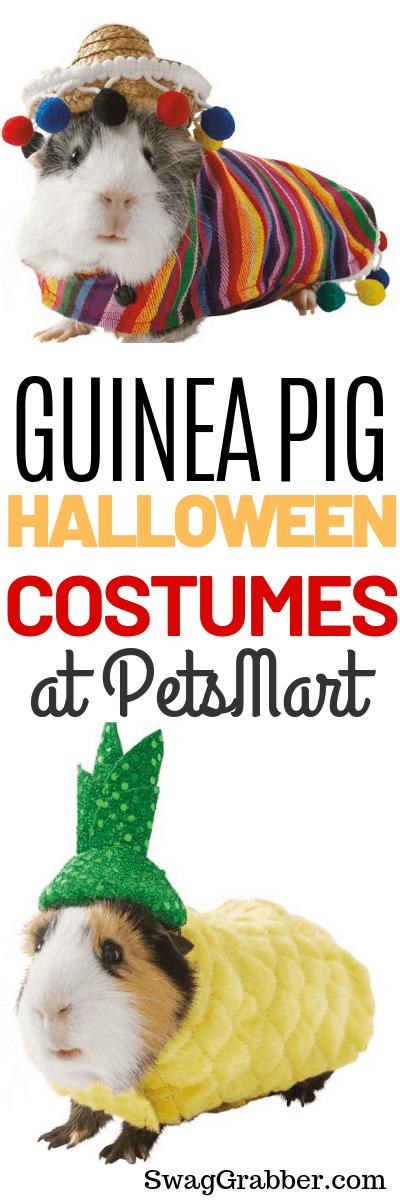 OMG Cuteness Overload - Petsmart has Guinea Pig Halloween Costumes