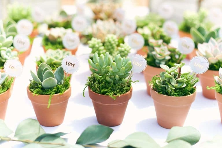 Assorted Collection of Live Succulent Plants   Collection of 40 Now .98 (Was .99)