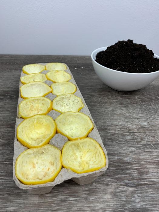 DIY Lemon Seed Starter Gardening Project for Kids