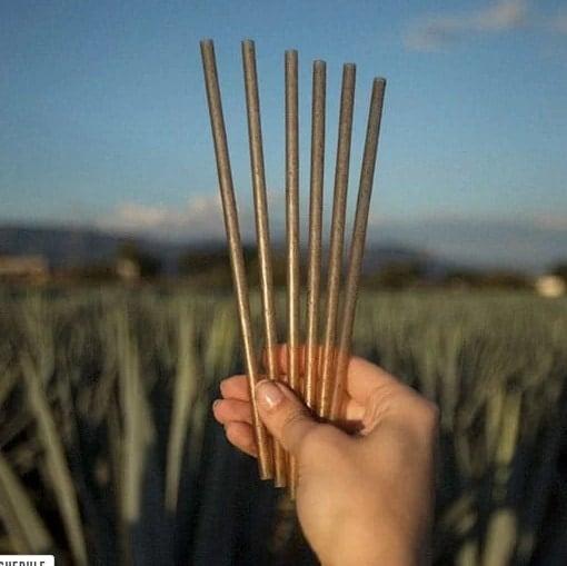 FREE Pack of Jose Cuervo Agave Straws