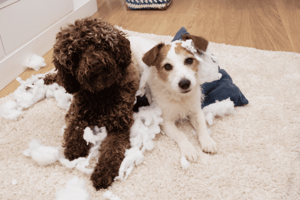 9 Easy Ways to Puppy Proof your Home for FREE